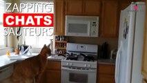 Quand les chats ratent leurs sauts... Tout de suite dans notre Zapping Chats Sauteurs !