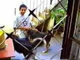 1997 - Eu e os cachorros