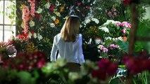 Rainha das Flores - Rosa   Promo SIC