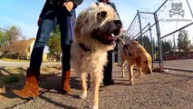 Guide Dogs Are Truly Amazing - Secret Life of Dogs - Earth