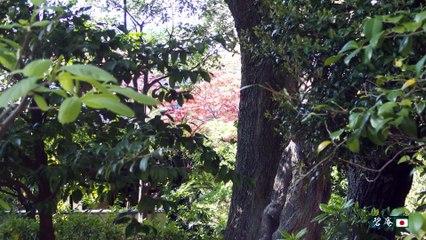 【2016/4/15】靖国神社:新緑