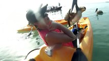 Friendly pelican introduces himself to kayaker