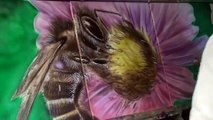 Abeille bee airbrush painting peinture contemporaine