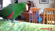 Funny Animals Dancing Compilation with the Best Funny Dancing Animals and Pets