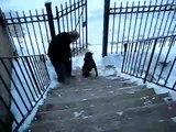 Un chien monte les escaliers debout