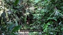 La Dynamique des Groupes des Peuples Autochtones, Congo, DR - Equator Prize 2015 Winner