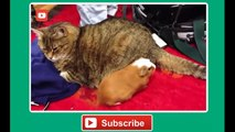 Funny cat vines - Ultimate funny vines with cats compilation 2014 - Funny Videos