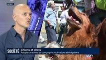 Chiens et Chats: adopter un animal de compagnie, motivations et obligations