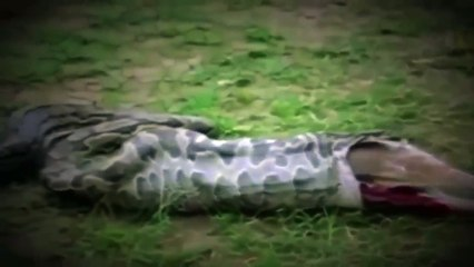 Discovery Channel EATEN ALIVE ANACONDA Paul Rosolie National Geographic Documentary