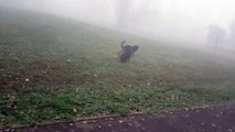 Axel-Rottweiler 7 months & 2 weeks