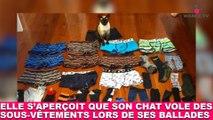Elle s'aperçoit que son chat vole des sous-vêtements lors de ses ballades ! L'histoire dans la minute chat #192