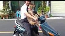 CRAZY - Dog Rides Bike, Dog Loves Bike And Bicycle