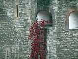 Tower of London Poppies - 12 November 2014
