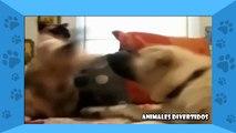 Animales Divertidos 2014 - Gatos DIvertidos - Gatitos Graciosos (Gatos vs Perros)