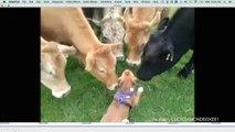 Da liegt was in der Luft: Kühe und Hunde
