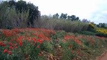 2016-05-Chemin d''Arles vers Compostelle (Arles-Montpellier) - Nicolas de Rauglaudre