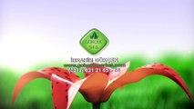 Ormus Tarım ile Aloe Vera Yetiştiriciliği, Aloe Vera Jelin Faydaları, Aloe Vera Ne İşe Yarar