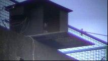 slechtvalken de mortel 2012 04 19 121722