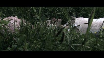Onde o Mar Descansa - Trailer Original