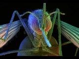 Mosquito   Mosquito Bite Itch   Mosquito & Malaria