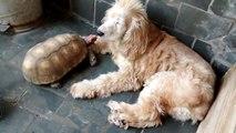 Minha tartaruguinha e minha cachorrinha