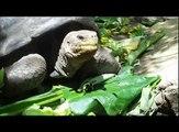 Turtles Feasting - Floreana Island - Galapagos
