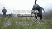 Shed Dog Training: Antler Silhouettes