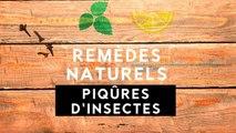 Remèdes naturels : les piqûres d'insectes, c'est fini !