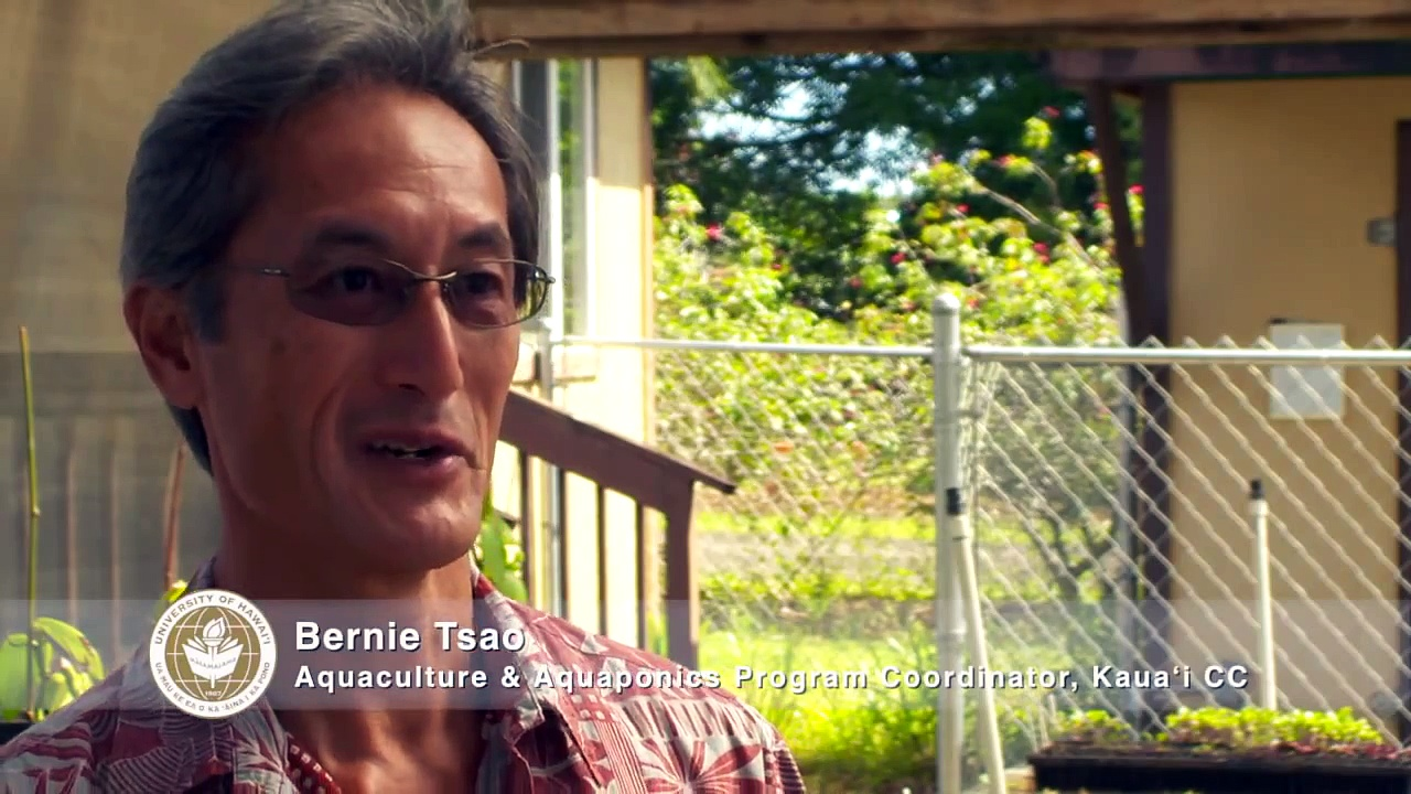 Aquaponics and sustainability at Kauai CC