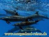 Delphin Tour-Hurghada-Rotes Meer-Morgenland-Reisen-Ausflüge in Hurghada