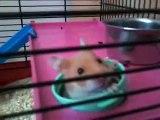 Bienchen von meiner freundin....... ich habe ein hamster bekommen