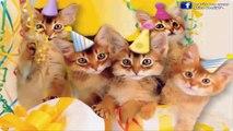 Bon Et Joyeux Anniversaire Vidéo Dailymotion