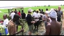 Esterel Caravaning: Début des plantations de paletuviers