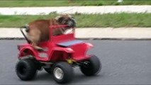 Dogs, Cats, Horses, and Cars!