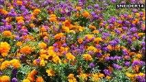 Most beautiful flower gardens in Canada - Les plus beaux jardins de fleurs au Canada