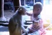 Ha Ha Ha !!! Crazy Monkey-Top Funny Videos-Top Prank Videos-Top Vines Videos-Viral Video-Funny Fails