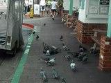 Chase the Birdies