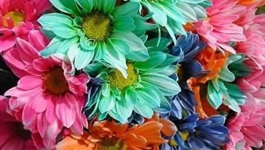 Hildegard Knef-Sag mir wo die Blumen sind - video dailymotion