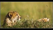 diaporama guepard