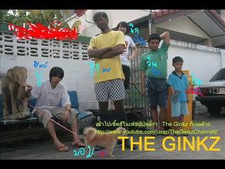 The Ginkz  - ปลิงดอง
