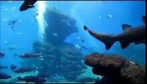 Palm Aquarium Fütterung im Haifischbecken