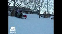 Bulldog Sledding Down Hill