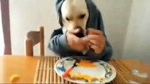 Il cane che mangia a tavola