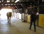 Ce cheval a une marche arrière... Ahahah