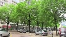 Carnage d'arbres annoncé en plein centre ville