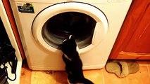 Cats vs Washing Machines