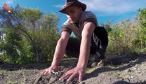 Mettre ses mains dans un nid de fourmis de feu