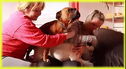 Animals Channel Dog health care, funny Dog, Dogs and Human Part29