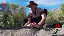 Il va énormément regretter d'avoir mis les mains dans un nid de fourmis de feu