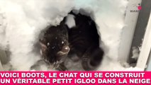 Voici Boots, le chat qui se construit un véritable petit igloo dans la neige ! Maintenant dans la Minute Chat #204
